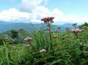 33ヨツバヒヨドリ越しの山々