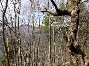 8-雑木林越しの山