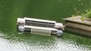 薬師池公園の亀