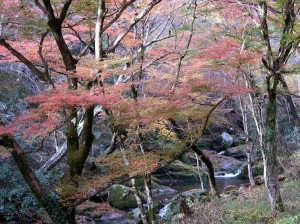 8花貫渓谷の紅葉並木路